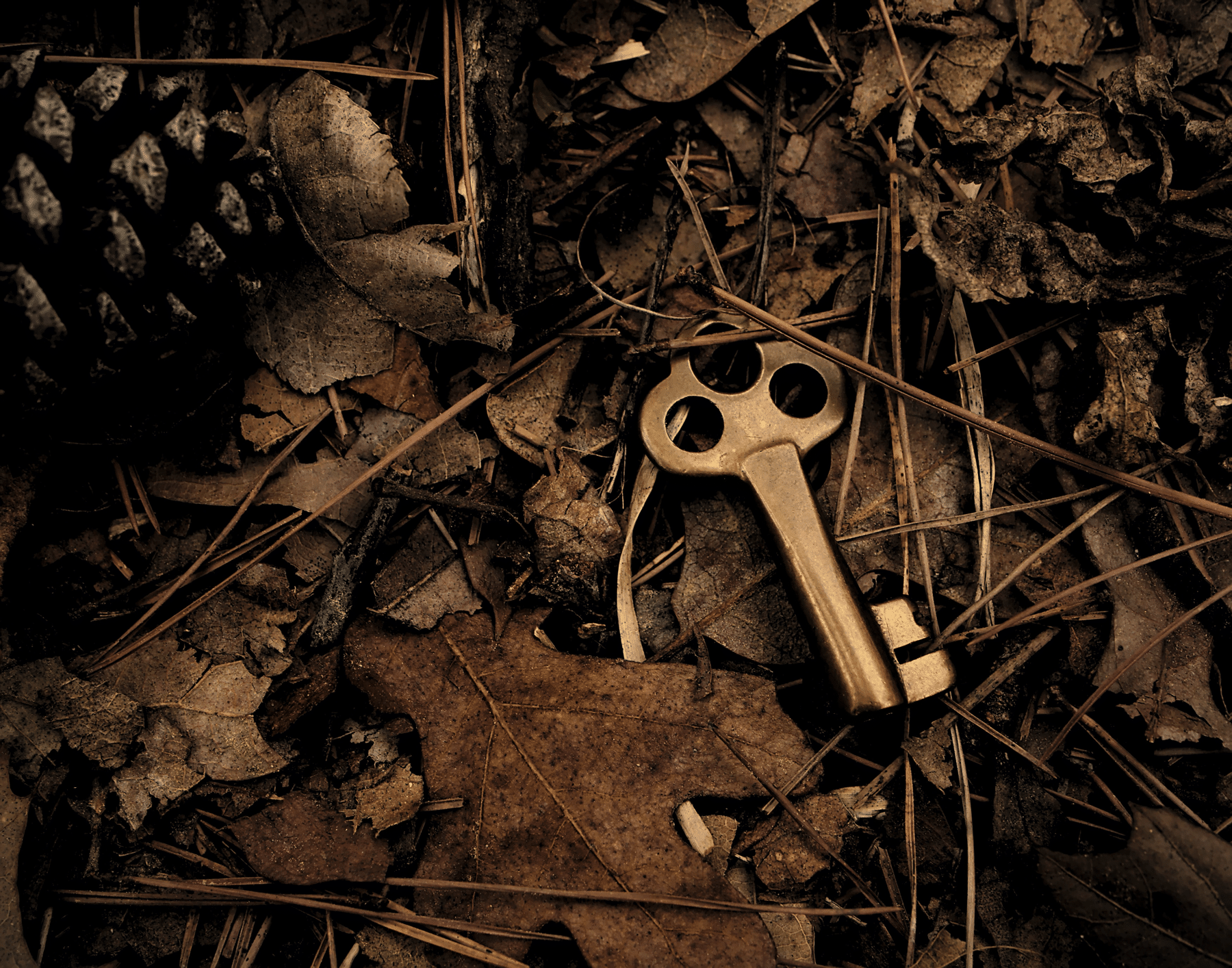 Skeleton key unearthed under leaves